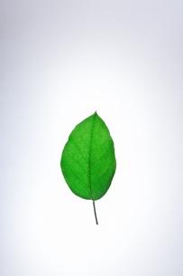 一枚の葉っぱの写真素材 [FYI00942102]