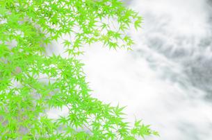 新緑と清流の写真素材 [FYI00942427]