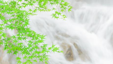 新緑と清流の写真素材 [FYI00942428]