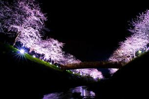 夜桜の写真素材 [FYI00942456]