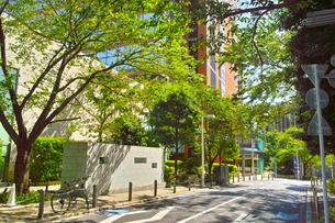 東京都港区六本木、夏のさくら坂の景観の写真素材 [FYI00942654]