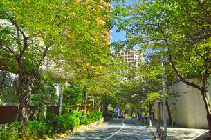 東京都港区六本木、夏のさくら坂の景観の写真素材 [FYI00942655]