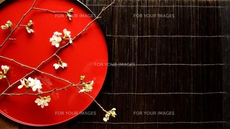 赤い漆塗りのお盆の上の抹茶と桜の写真素材 [FYI00942676]