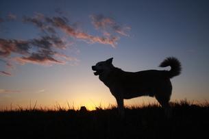 夕焼けと犬のシルエットの写真素材 [FYI00942795]