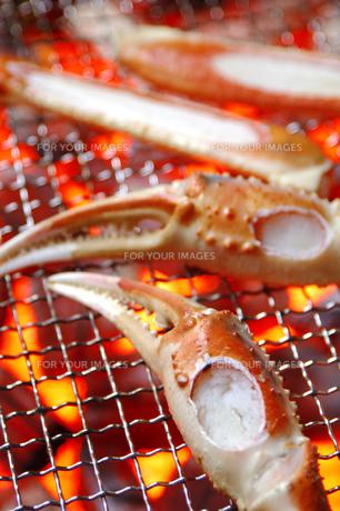 ずわい蟹の素材 [FYI00943803]
