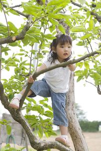 木に登る女の子の素材 [FYI00943879]