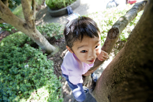 木に登る男の子の素材 [FYI00944017]