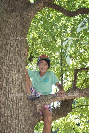 木の上で腰掛ける少年の素材 [FYI00944029]
