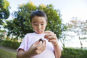 蝉を手に持って見つめる男の子の素材 [FYI00944036]