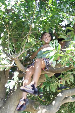 木の上で腰掛ける少年の素材 [FYI00944043]