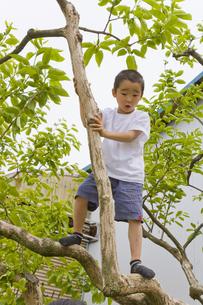 木に登る男の子の素材 [FYI00944048]