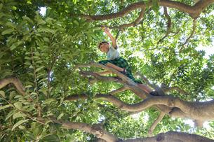 木に登る少年の素材 [FYI00944050]