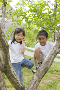 木に登る男の子と女の子の素材 [FYI00944081]