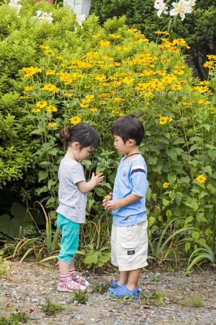 黄色い花の前で遊ぶ子供の素材 [FYI00944144]