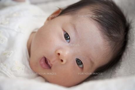 見つめる赤ちゃんの素材 [FYI00944366]