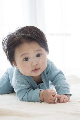 はいはいする赤ちゃんの素材 [FYI00944425]