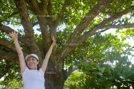 大木の前で両手を広げる女性の素材 [FYI00944933]
