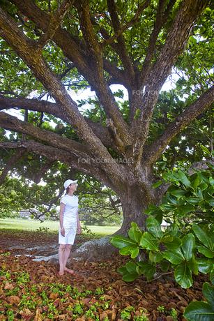 大木の前に立つシニア女性の素材 [FYI00944964]