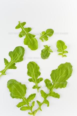 並べたルッコラの葉の素材 [FYI00945013]