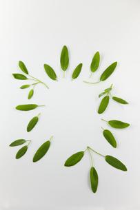 円形に並べたセイジの葉の素材 [FYI00945063]