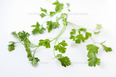 イタリアンパセリの葉の素材 [FYI00945140]