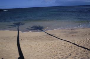 砂浜のやしの木の陰の素材 [FYI00945215]