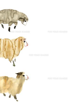 左から歩き出す三匹の羊の素材 [FYI00946068]