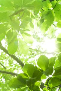 新緑と木漏れ日の素材 [FYI00949393]