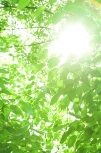 新緑と木漏れ日の素材 [FYI00950392]