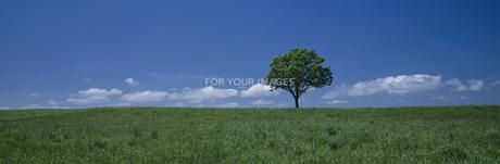 草原と立木の素材 [FYI00950656]