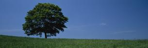 草原と大樹の素材 [FYI00950676]