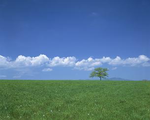 草原と立木と雲の素材 [FYI00950688]