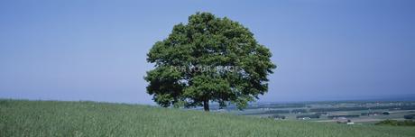 草原と大樹の素材 [FYI00950726]