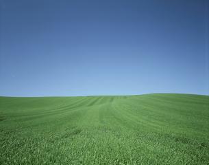 草原と青空の素材 [FYI00951113]