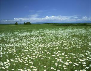 花咲く丘と雲の素材 [FYI00952212]