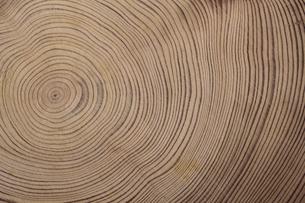 屋久島杉の年輪の素材 [FYI00952295]