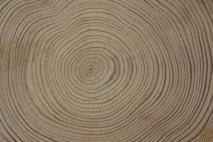 屋久島杉の年輪の素材 [FYI00952341]
