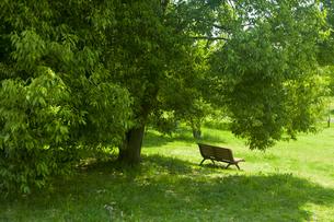 新緑とベンチの素材 [FYI00952745]