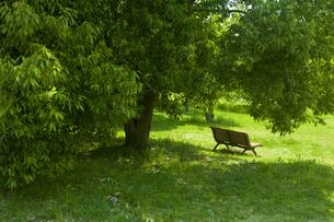 新緑とベンチの素材 [FYI00952813]