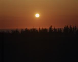 並木と太陽の素材 [FYI00952981]