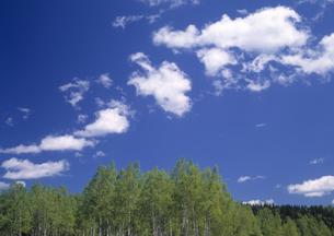 新緑の白樺並木の素材 [FYI00952987]