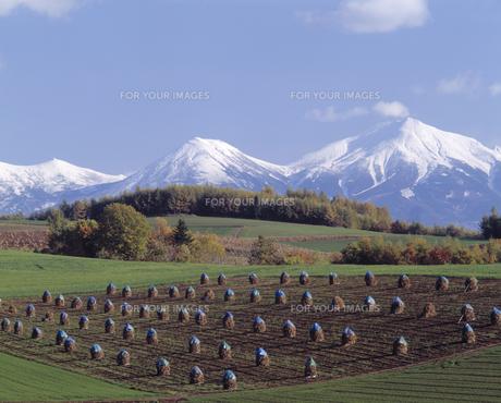 新雪の大雪山と秋の田園の素材 [FYI00953035]