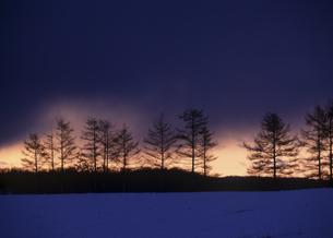 雪原の並木と朝焼けの素材 [FYI00953229]