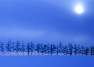 雪原の並木と朝日の素材 [FYI00953233]