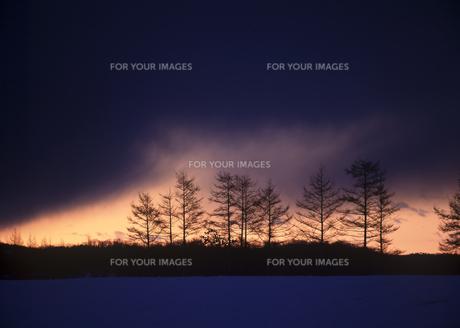 雪原の並木と朝焼けの素材 [FYI00953236]