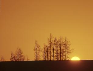 雪原の並木と日の出の素材 [FYI00953237]