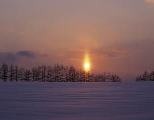 雪原の並木と日の出の素材 [FYI00953239]