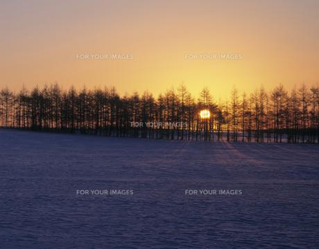 雪原の並木と日の出の素材 [FYI00953241]