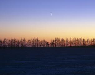 雪原の並木と日の出の素材 [FYI00953242]