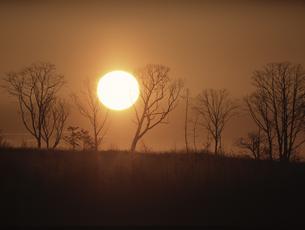 雪原の並木と日の出の素材 [FYI00953244]